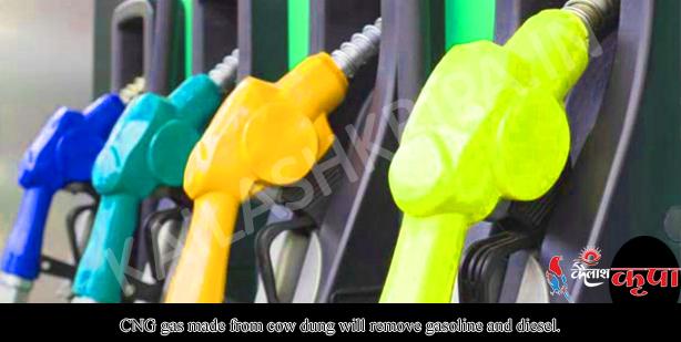 गाय के गोबर से बनी सीएनजी गैस पेट्रोल-डीजल की हवा निकाल देगी